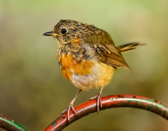 Dicas de Birdwatching