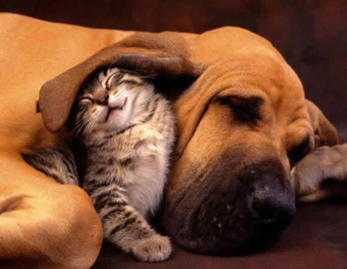 Dicas de Viagem - Viajar com animais de estimação: o que fazer?